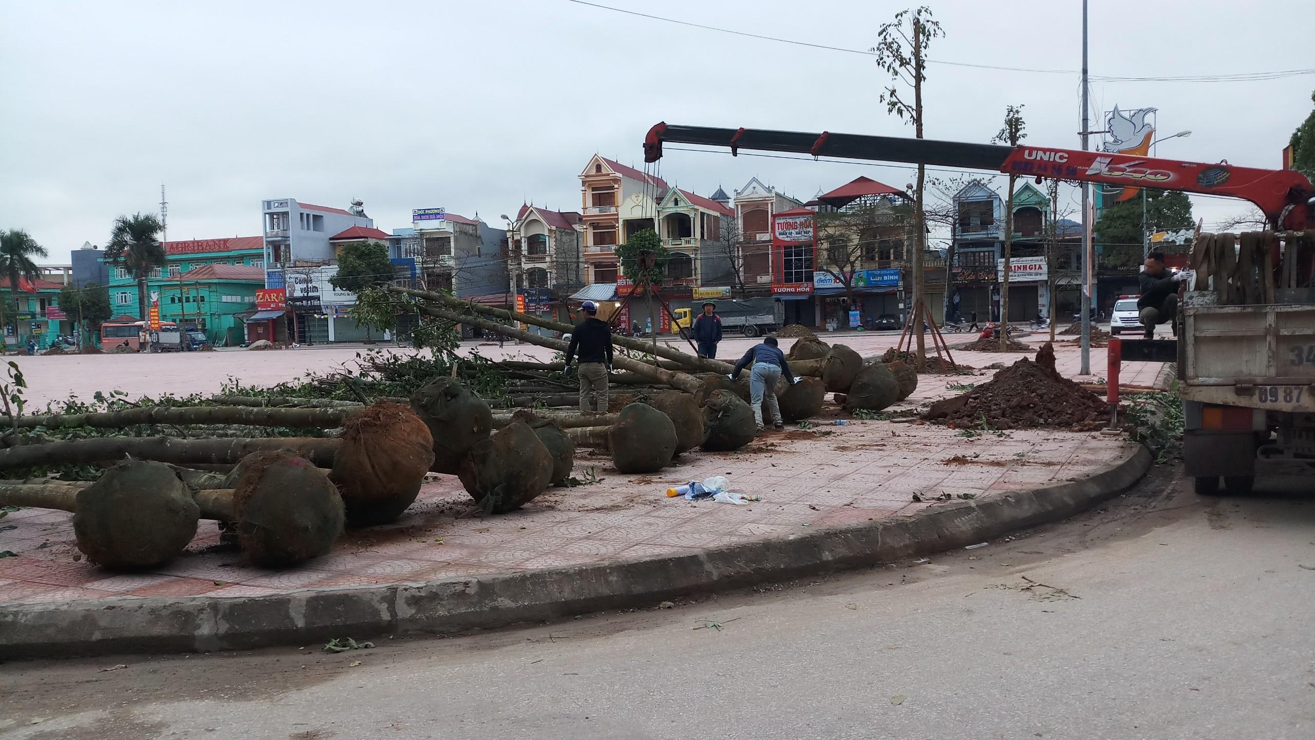Dự án cây xanh đô thị ở Lục Ngạn - Bắc Giang