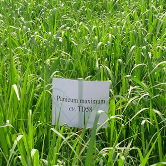 Hạt cỏ