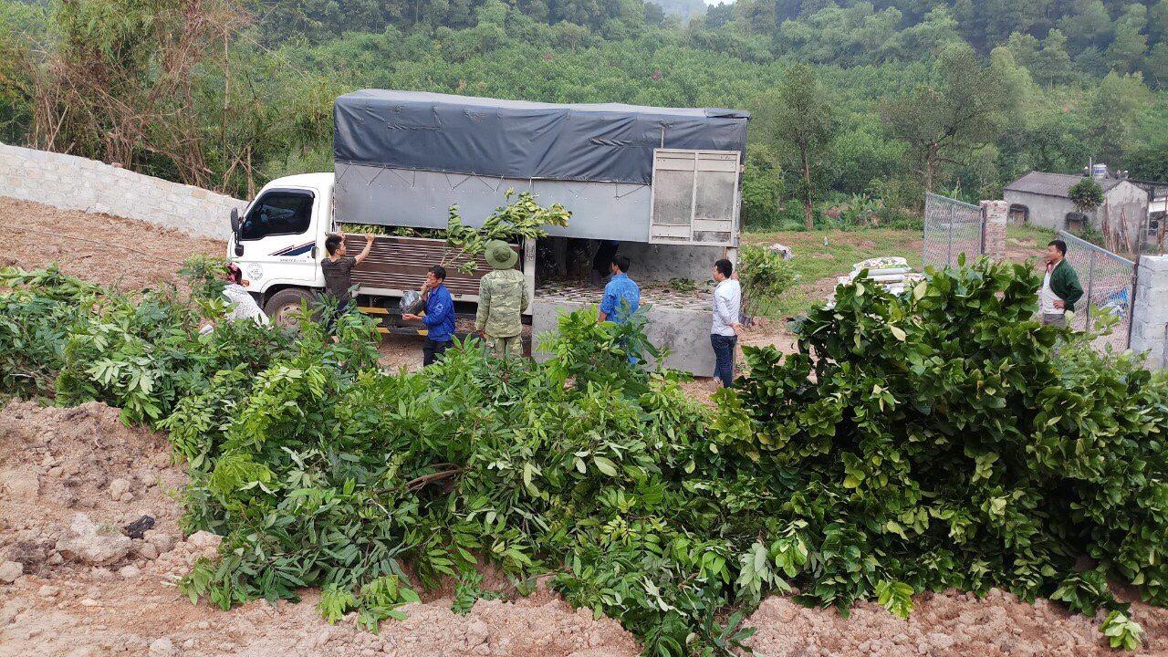 Hoàn thành dự án trồng Cây ăn quả ở Phú Lương - Thái Nguyên