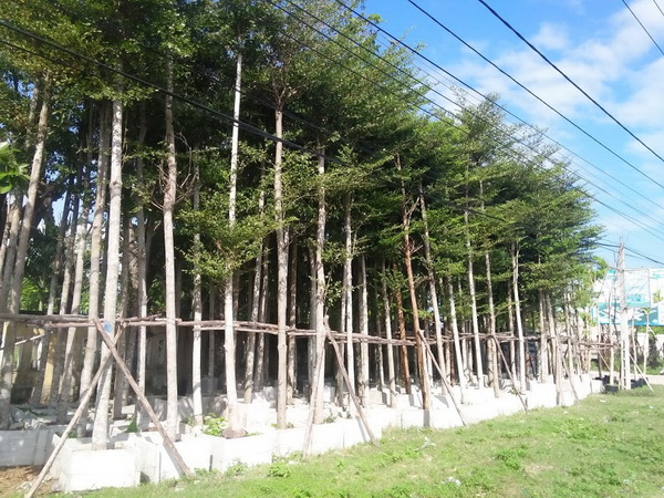 Giống cây khác