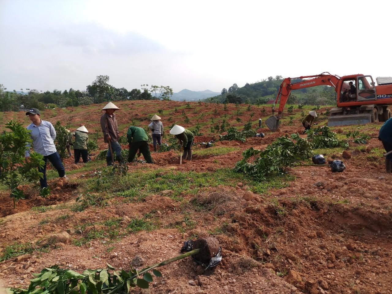 Thiết kế trang trại cây ăn quả tại Anh Sơn - Nghệ An