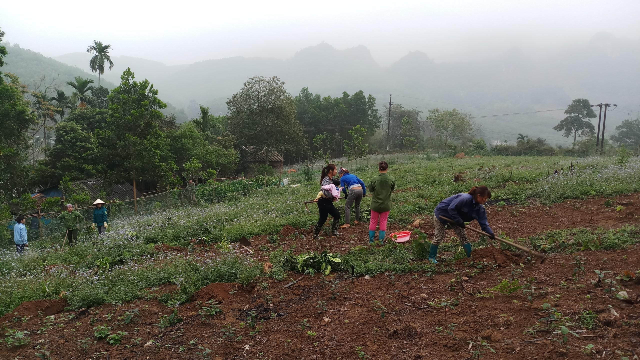Cung cấp cây ăn quả ở Lạc Thủy - Hòa Bình