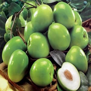 Giống táo Thái Lan