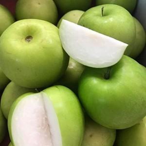 Giống táo Đài Loan