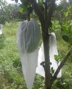 Bao bọc trái mít lớn ( 15kg)