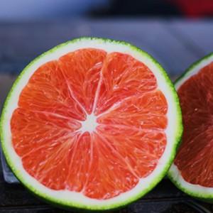 Giống cây cam cara