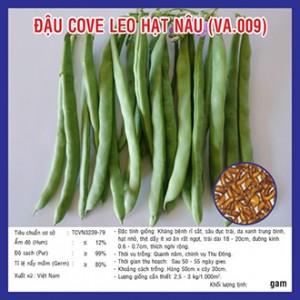 Hạt giống đậu cove leo hạt nâu