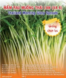 Hạt giống mầm rau muống Thái Lan